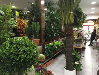 Florister as madrid for Jardines con plantas artificiales