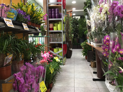 Florister as madrid for Horario verdecora