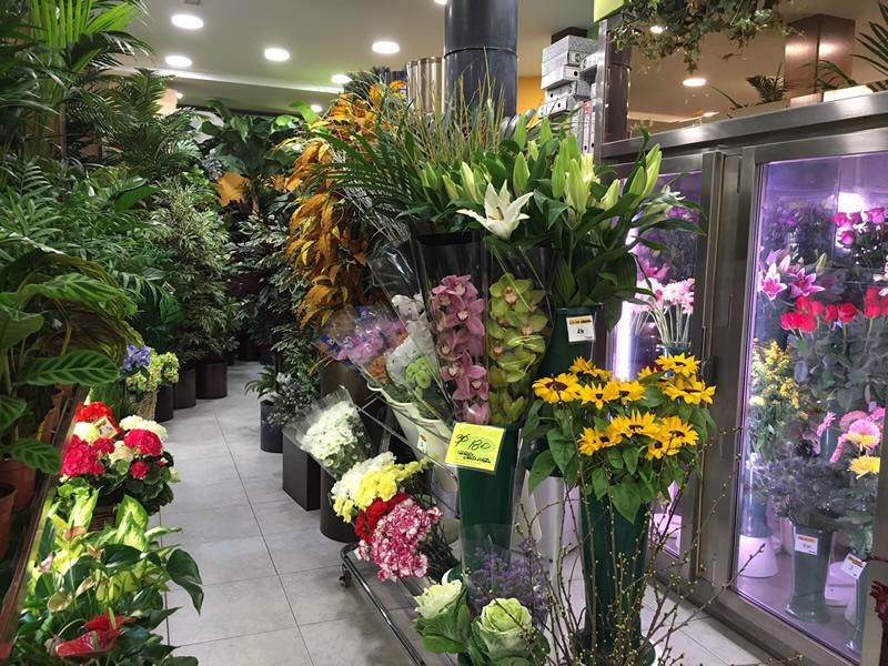 Florister as madrid for Plantas de interior madrid